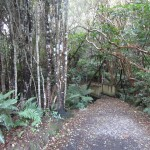 Waipohatu Recreation Area Trail