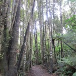 Waipohatu Recreation Area Trail